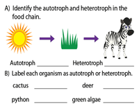 Autotrophs vs Heterotrophs Worksheet
