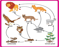 together with  likewise Carnivore Herbivore Omnivore And Food Chain 8 Being Great With Bates together with Worksheets Food Chain Pyramid Free For 5th Grade Web Worksheet And also  as well Frog Food Chain Lesson Plans   Worksheets Reviewed by Teachers in addition 2nd grade  3rd grade Math Worksheets  Reading bar graphs   Education likewise Ecosystem Worksheets Food Web Worksheet New Awesome Energy Flow In additionally Best Of Food Chain Worksheets Food Chain Worksheets Super Best Food further Food Chain Worksheets   Homedressage as well Inspiration Free Printable Worksheets On Food Chains In Food Chain further Food Chain Worksheets   Ecosystem and the Food Web likewise Food Chains and Food Webs Worksheets   Siteraven further Web Quest  Food Chains   Food Webs – Science with Mrs  Barton in addition Food Chain Worksheet 3rd Grade   Oaklandeffect also Food Chain Activity 3rd Grade   Foodstutorial org. on food chain worksheets 3rd grade