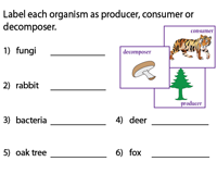 Producers, Consumers or Decomposers?