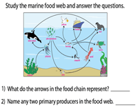 Interpreting a Marine Food Web