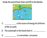 Pond Food Chain Worksheet