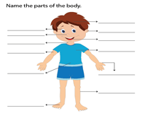 Name the parts of the body