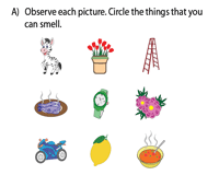 The sense of smell worksheet