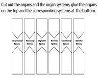 Organs and Organ Systems | Cut and Glue