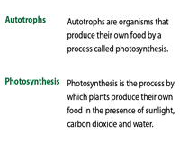 Photosynthesis | Basic Vocabulary