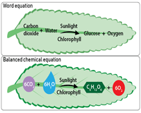 Photosynthesis Equations Chart