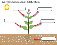 Label the Reactants and Products of Photosynthesis