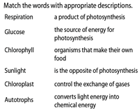 Photosynthesis | Matching Activity