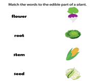 Edible parts of a plant | Matching