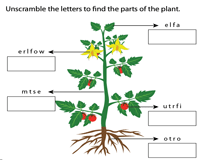 Unscramble the parts of a plant