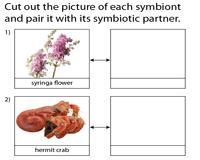 Symbiosis Worksheets