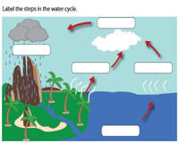 Label the steps in the water cycle